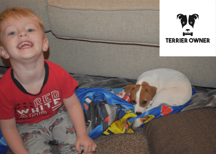 my-son-and-jack-russell-watching-movie